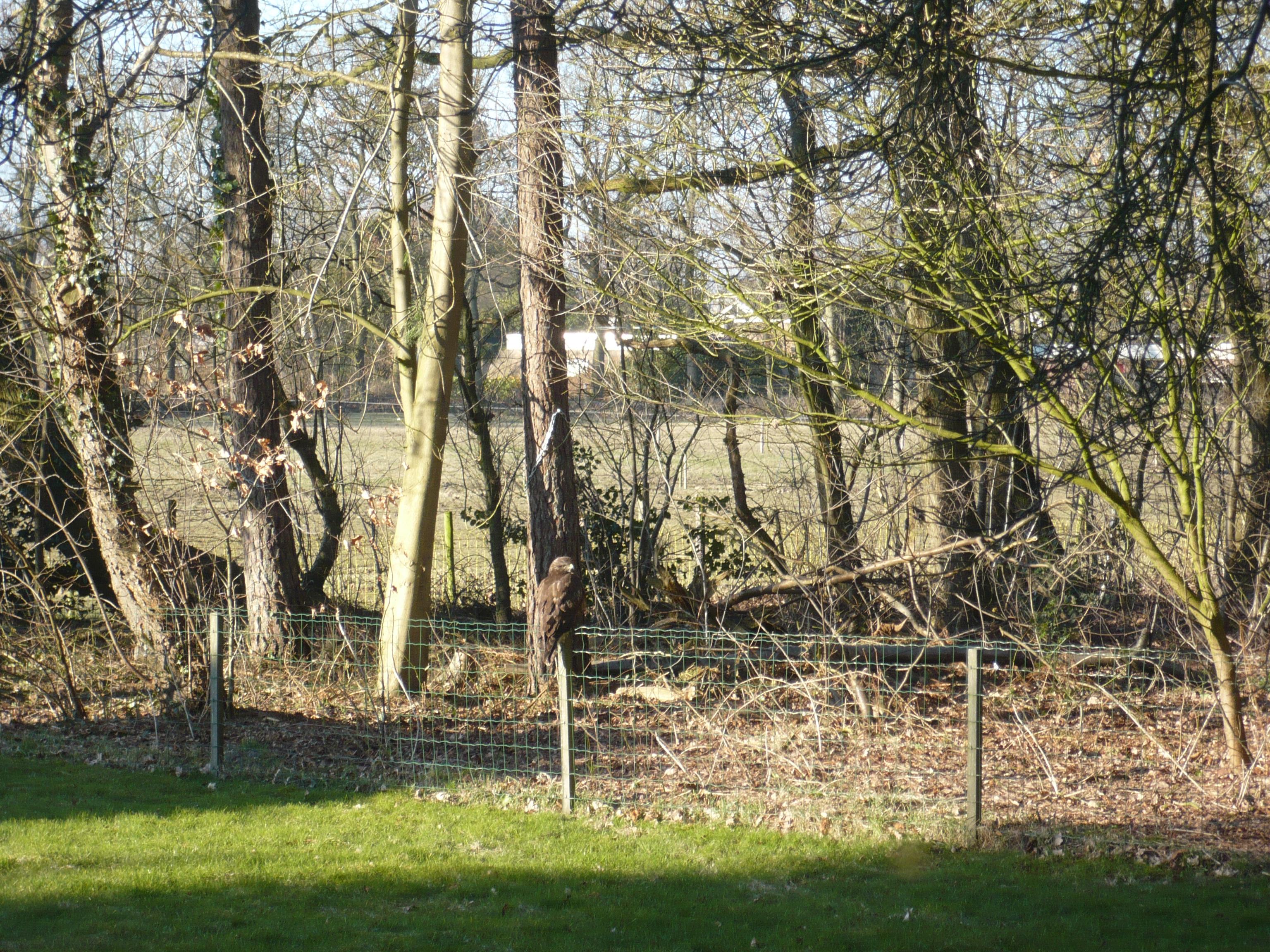 Zomaar op een paaltje in de tuin...